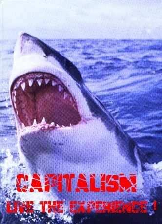 Акулы стали чаще нападать на людей.